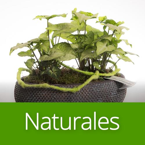 Plantas naturales