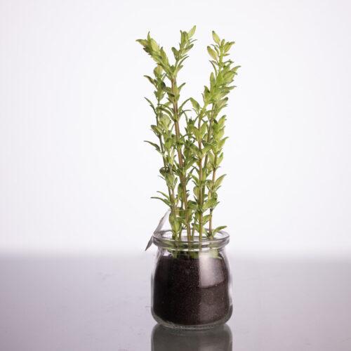 Plantas artificiales archivos floristeria fontanillas for Plantas ornamentales artificiales